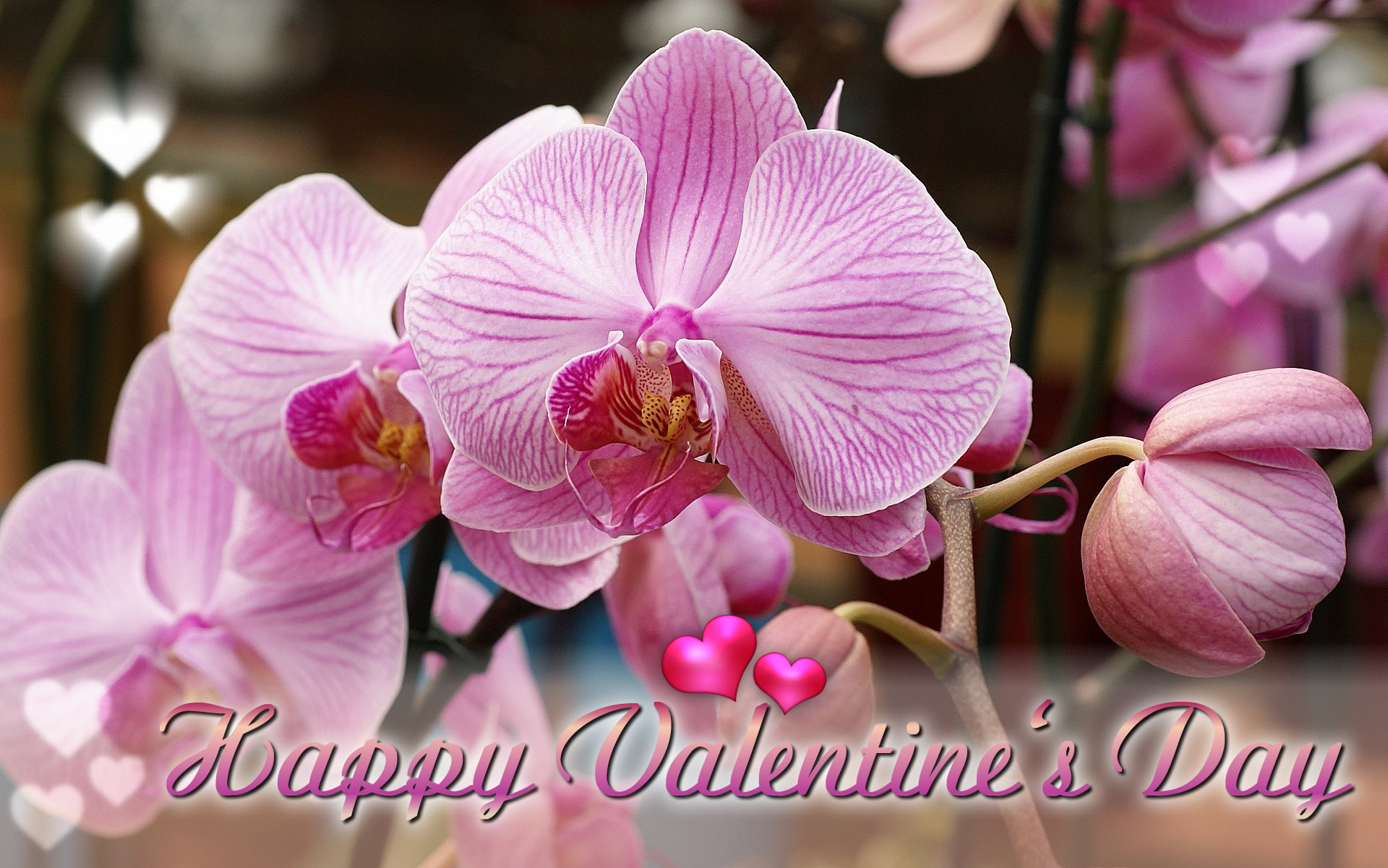 Happy Valentine's Day ecard orchids