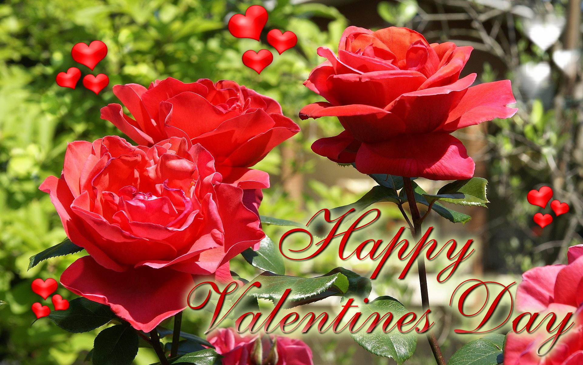 happy valentine u0027s day ecard