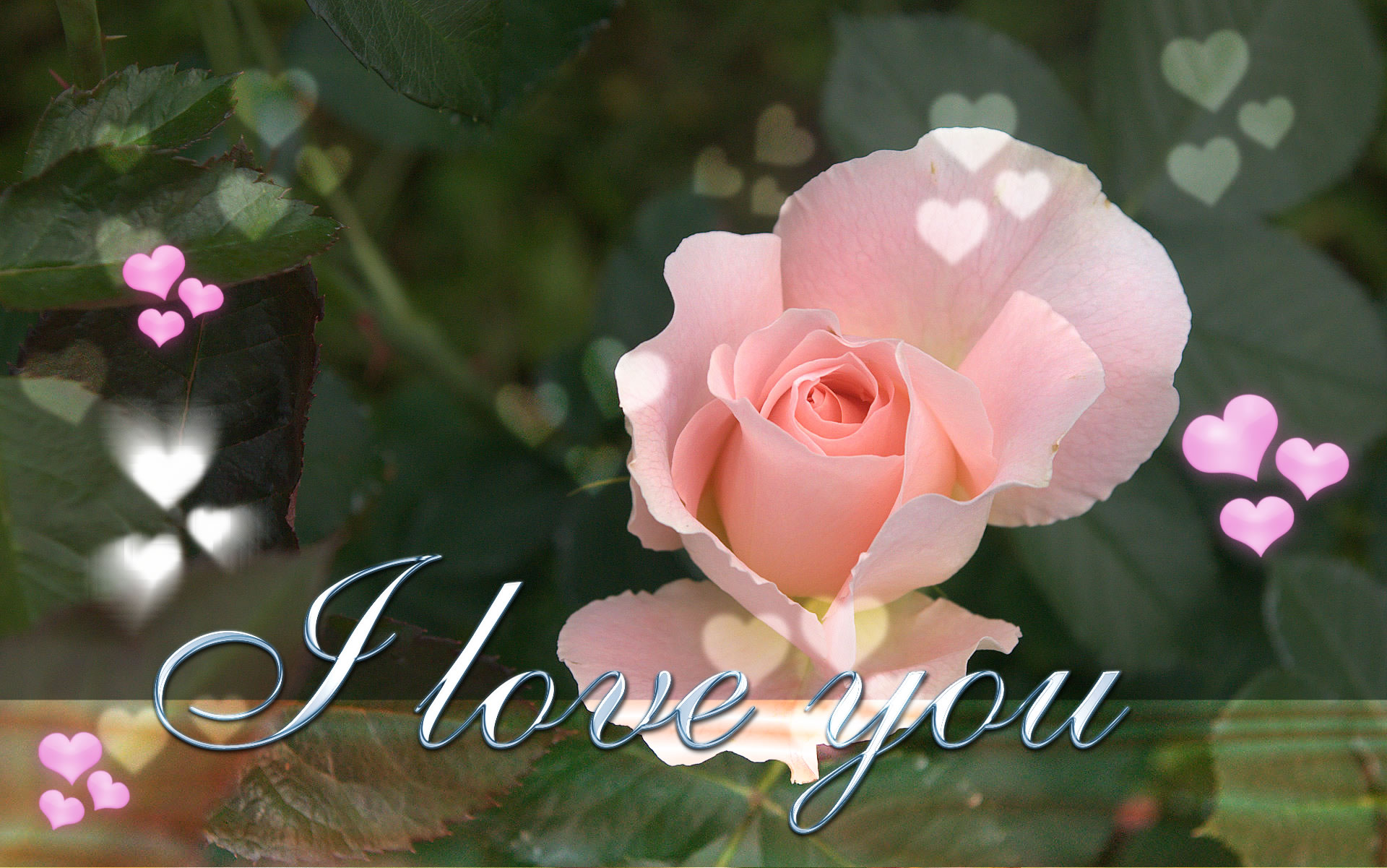 sweet i love you wallpaper in high resolution 1920x1200 pixel.