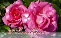 Valentine's day ecard pink roses