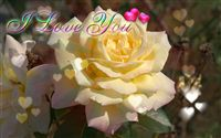 I love you ecard yellow rose