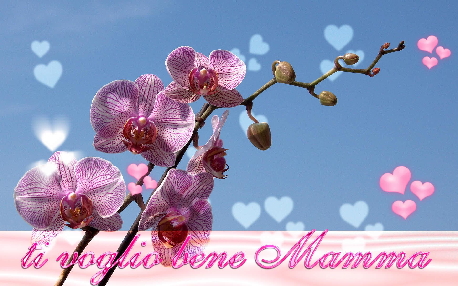 Buon Compleanno Mamma Glitter.Auguri Mamma Su Ezio Brugali Blog