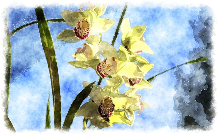 Orchid watercolor painting
