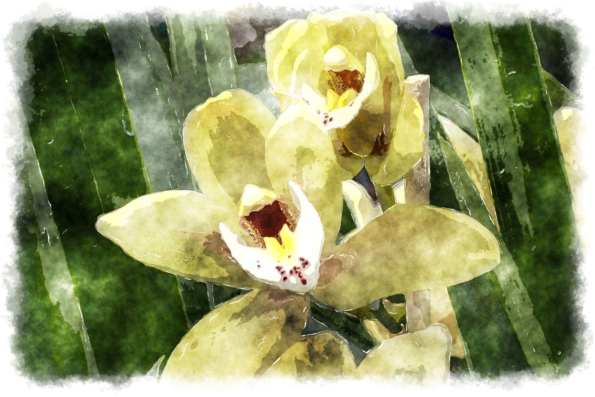 Sprint Garden additionally Watercolor Orchid Painting in addition 176 Monstera Leaf 1245cm 3516820031164 together with ment Entretenir Son Orchidee as well Hervey Bay attractions. on orchid art