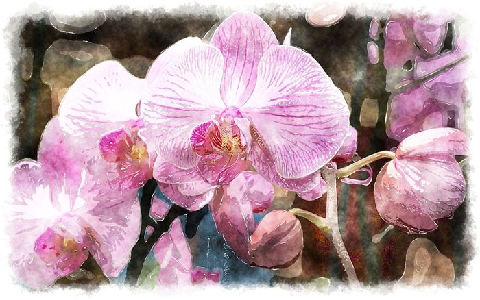 photo watercolor pink orchid
