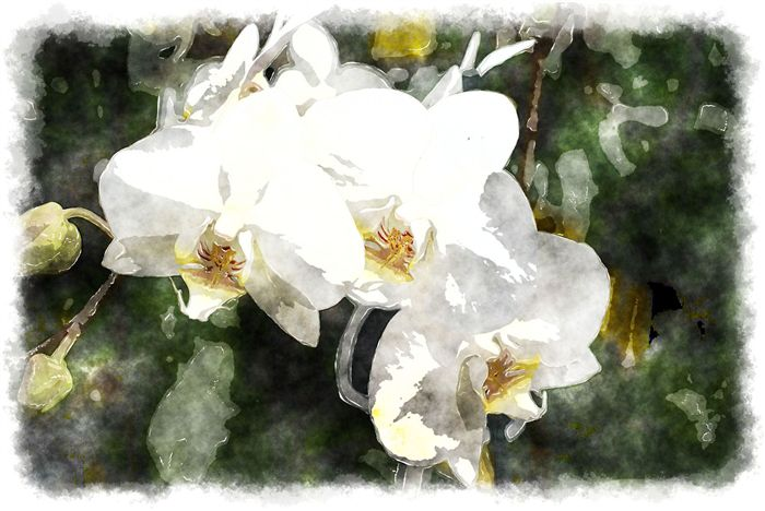 photo white phalaenopsis watercolor painting