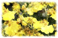 yellow oncidium orchid watercolor picture