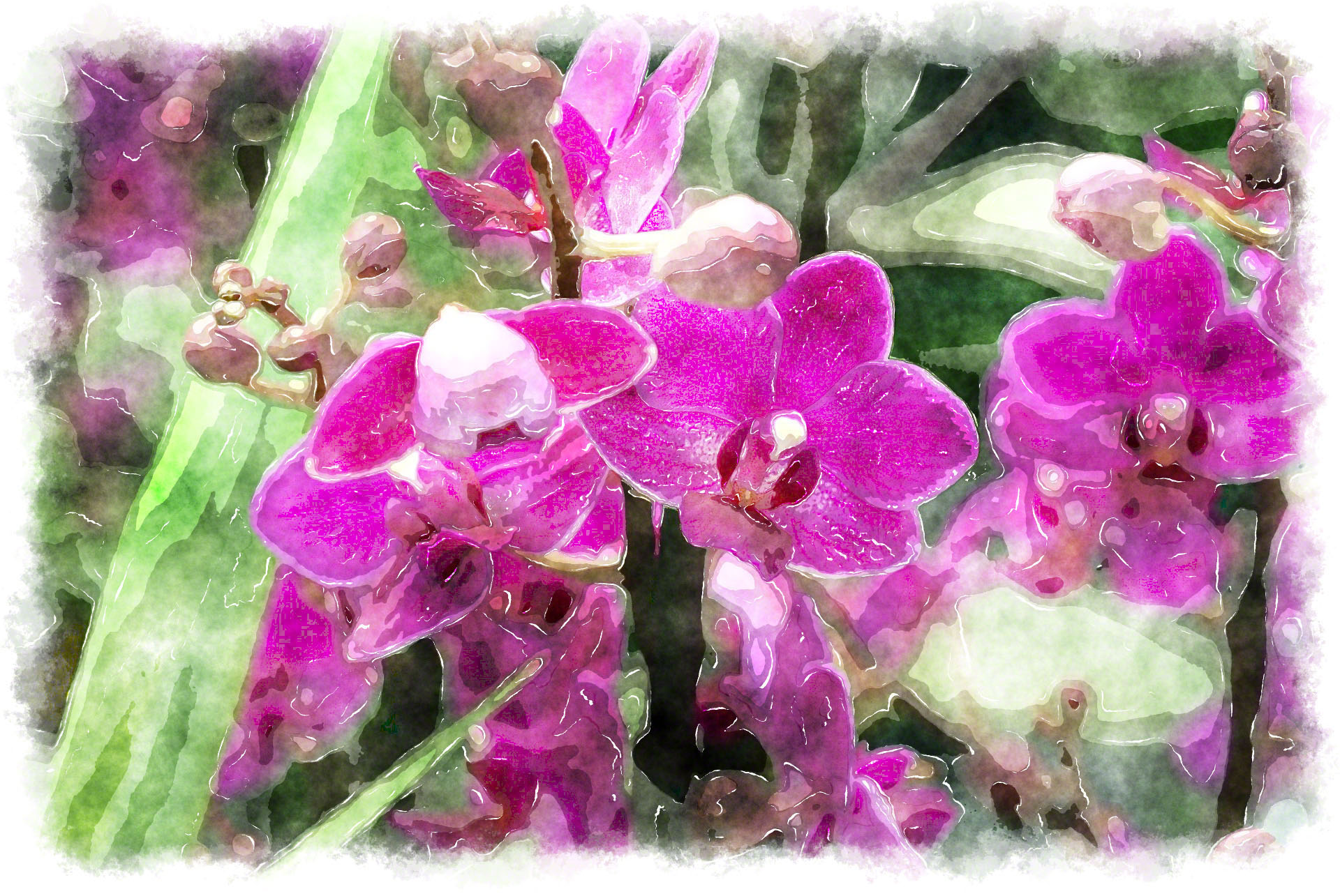 dark pink watercolor orchid picture