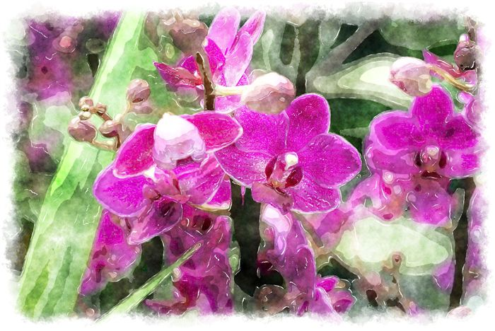 photo dark pink watercolor orchid picture