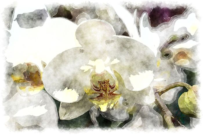 watercolor white orchid