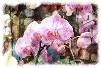 most beautiful pink orchid watercolor painting