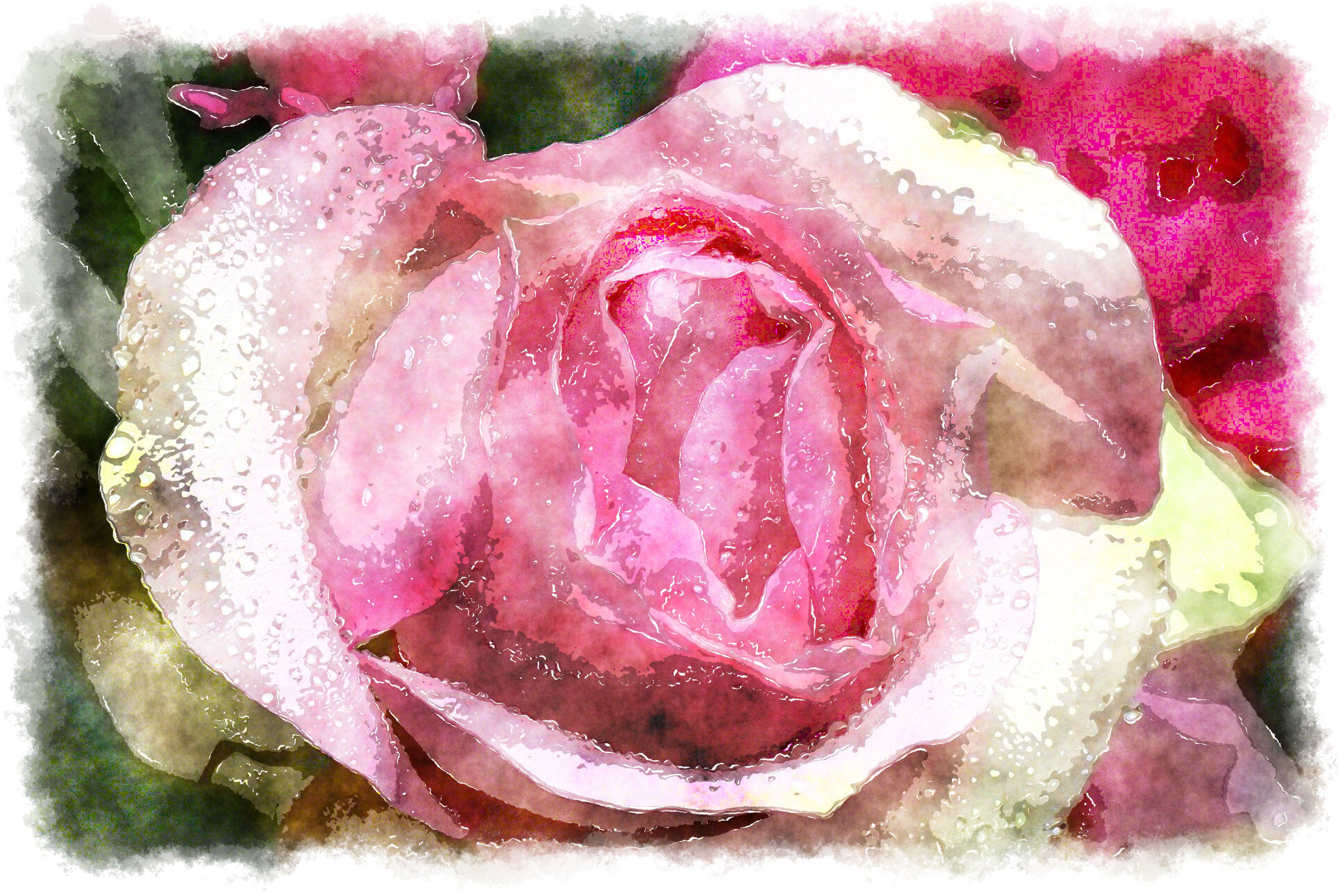 pink rose watercolor