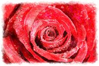watercolor red rose macro