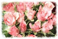 pink rose bouquet watercolor