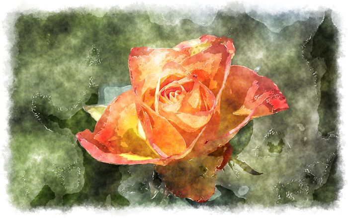 photo watercolor orange rose