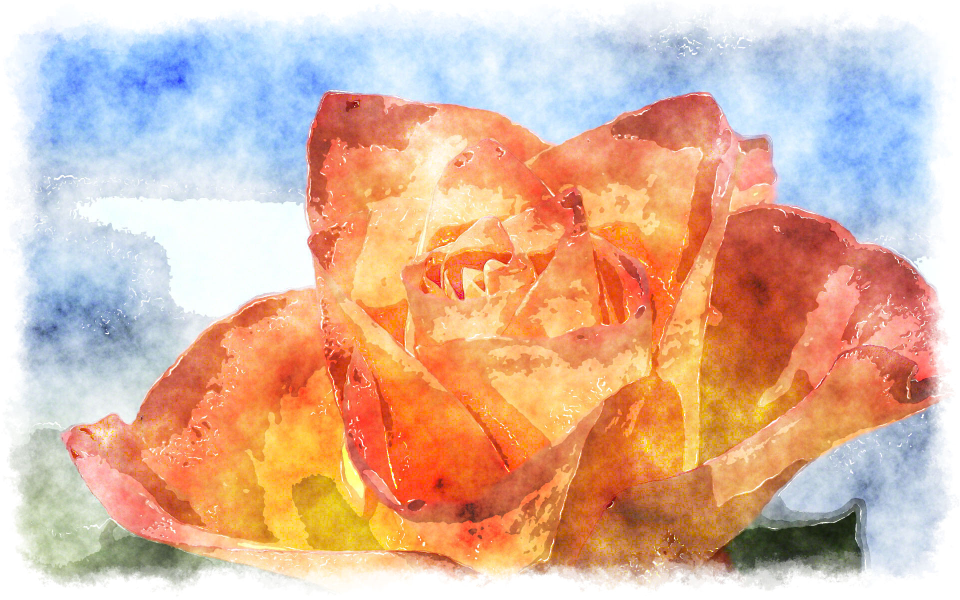 orange rose watercolor