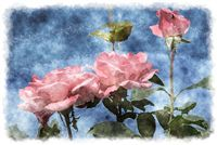 light pink roses watercolor