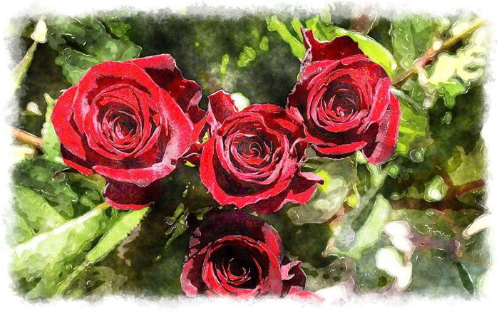 photo watercolor 4 red roses