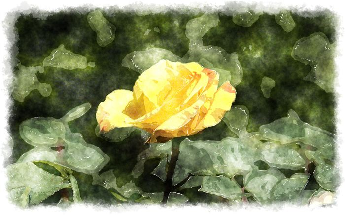 photo yellow rosebud watercolor