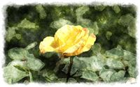 yellow rosebud watercolor