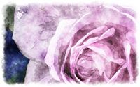 Watercolor roses, watercolor painting of beautiful rose
