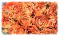 orange roses bouquet watercolor