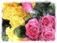 watercolor rose yellow and pink