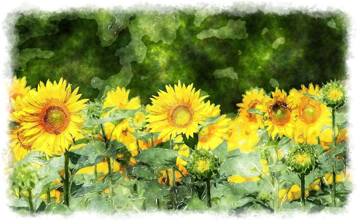 photo sunflower paintings