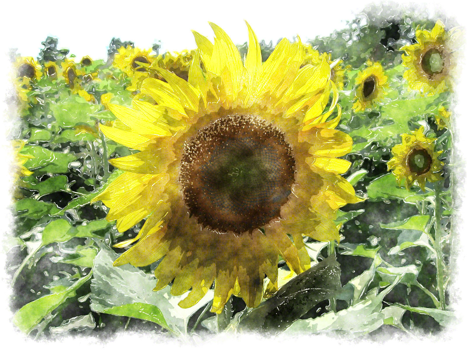 sunflower watercolor paint
