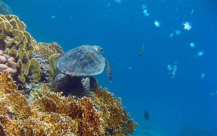 wallpaper sea turtle. sea turtle wallpaper