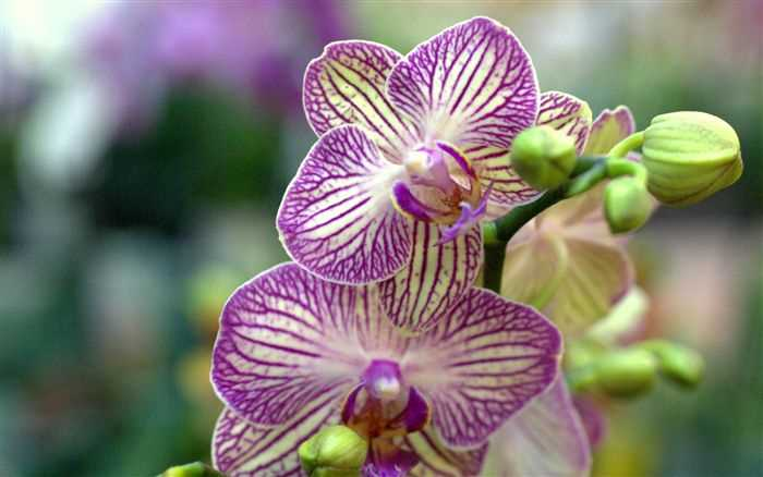Orchid flower, Orchids photo wallpaper for your desktop